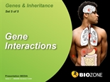 Picture of Gene Interactions