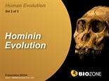 Picture of Hominin Evolution